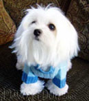 Fashionista's Fashion Dog Clothes