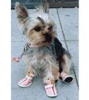 Fashionista's Fashion Dog Clothes